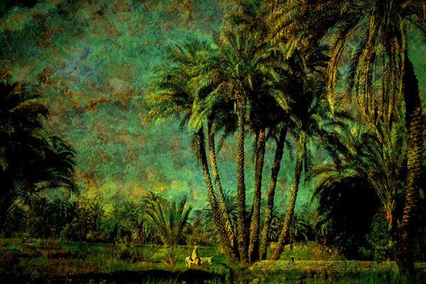 Homme sur sa monture dans la palmeraie