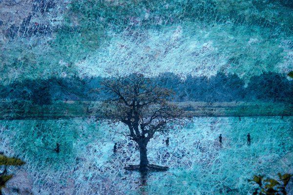 Arbre du lac sur fond bleu