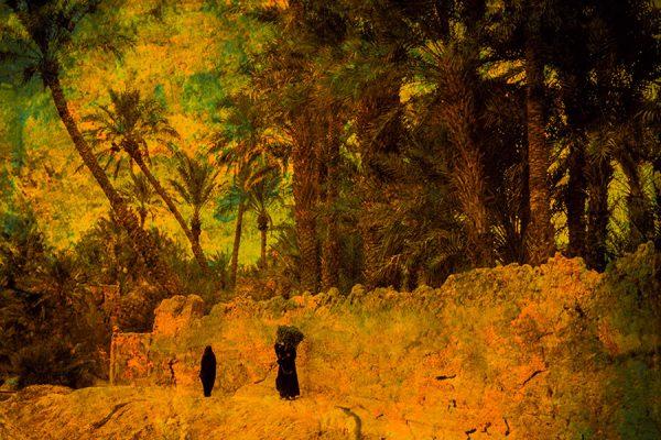 Muraille et palmeraie